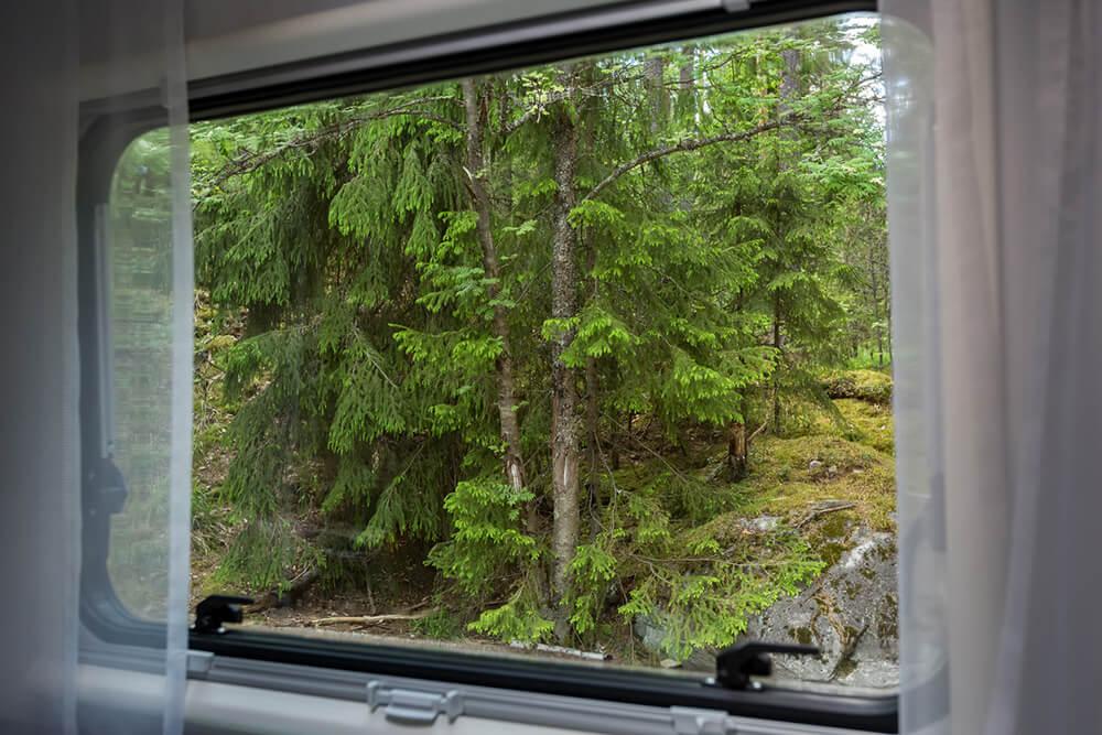 Aussicht aus einem Wohnmobilfenster auf einen grünen Nadelwald.