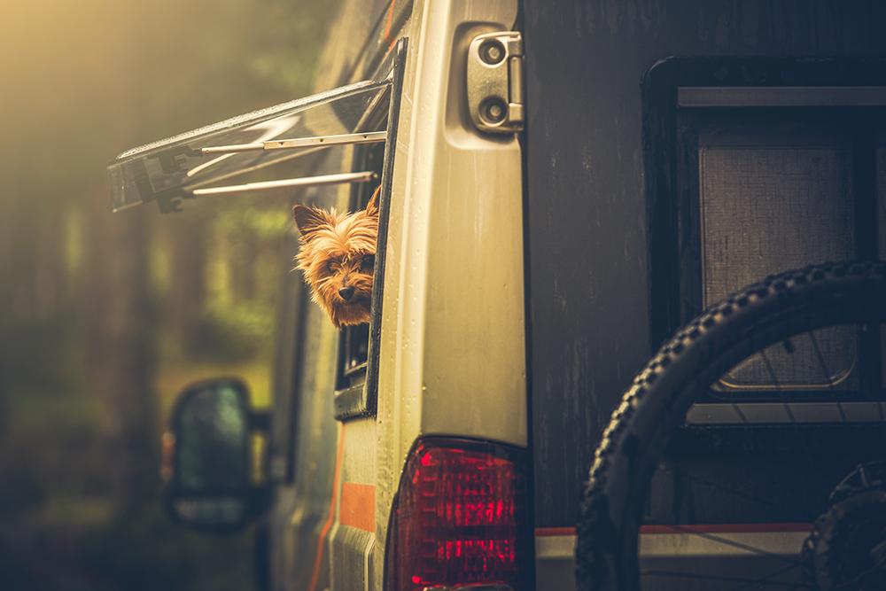 Ein kleiner Hund schaut links aus dem geöffneten Campingfenster eines Wohnmobils nach hinten in die Kamera.